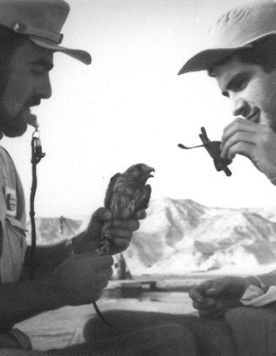 08-01.- Prácticas de cetrería con un Cernícalo Primilla Foto: Gregorio Ortega. Aargub, Septiembre 1974