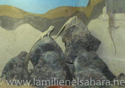XVEnc_Tabernas_064