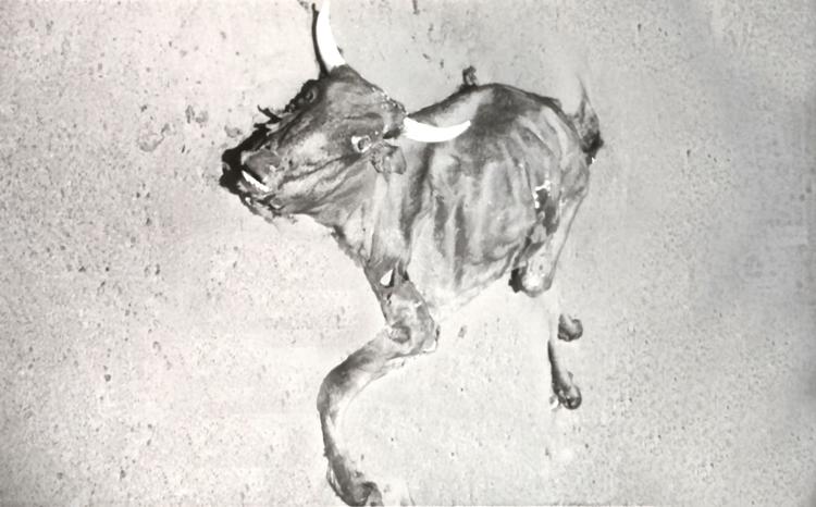 06-07b.- ¿Mala adaptación al desierto? ¿Error de cálculo?. Pronto lo cubrirá la arena. Foto: Juan Francisco Trujillo. Zona de Auserd, 1972-1973