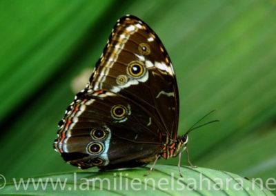 Mariposa, Amazonia Ecuatoriana - Autor: Ernest Vilches.